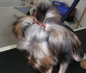 Barette pour chien